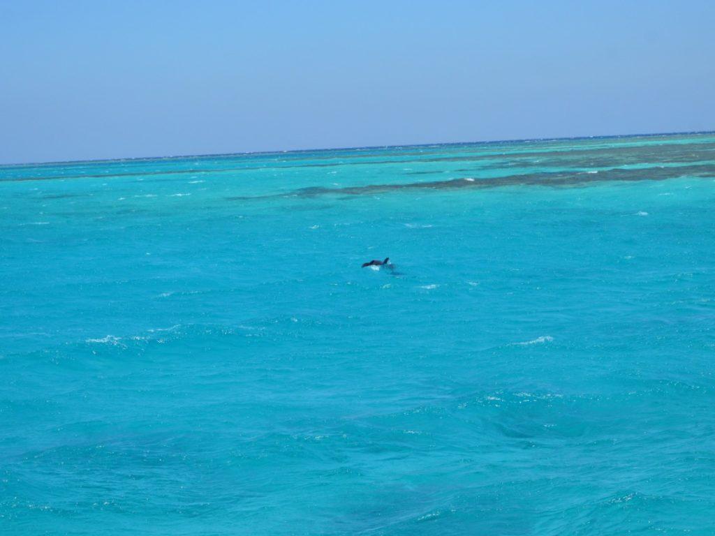 Прогулка по восточному в бухту дельфинов (ROYAL DOLPHIN)